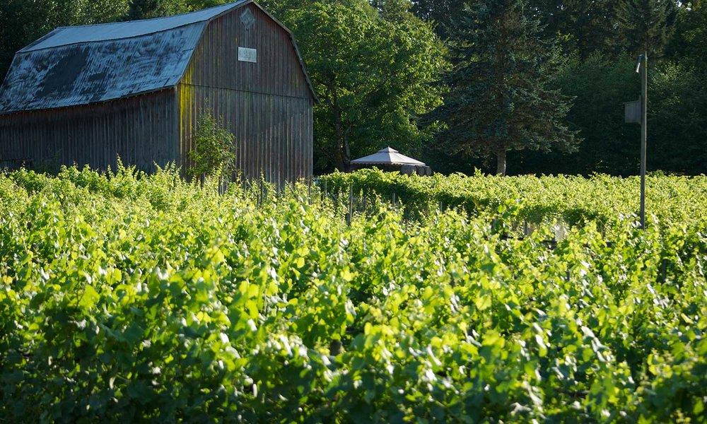 Lee-Murphy---vines-barn.jpg