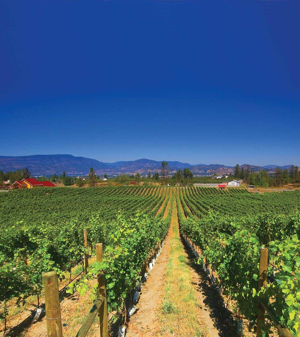 SpierHeadmag-vines.MoreSky2.jpg