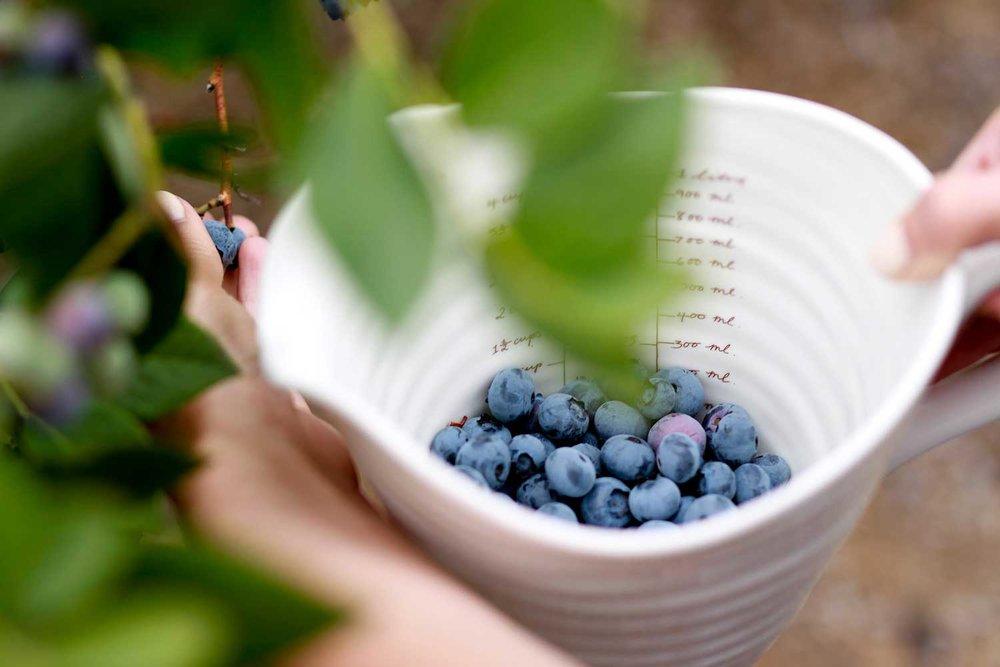SequelPhotography-Blueberry(5of7).jpg