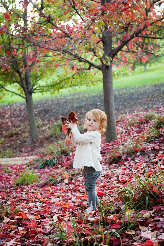 Incredible fall color.