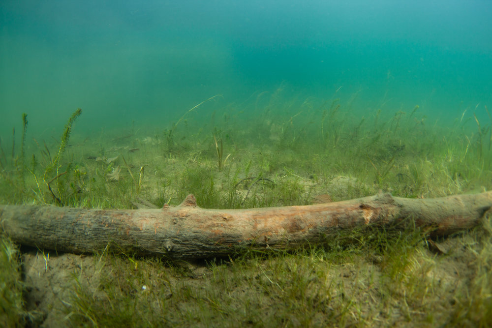 So while I botched this one (soft focus on the log) this image is exactly what I think of when I think of the bottom of Lake George. It's a very common scene in shallow bays.