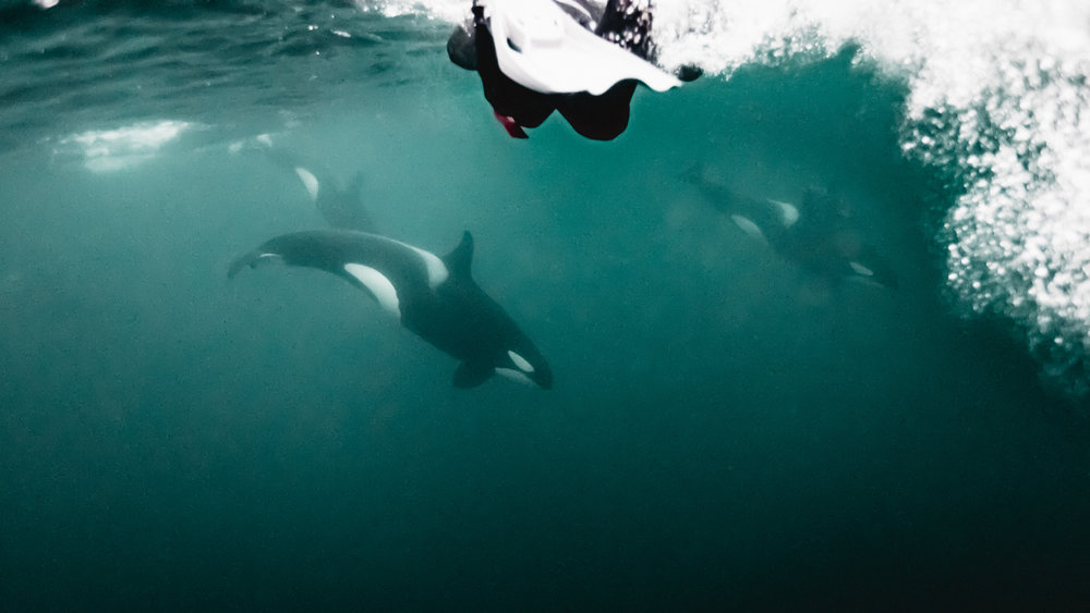 Wild encounters with Orca are AMAZING!