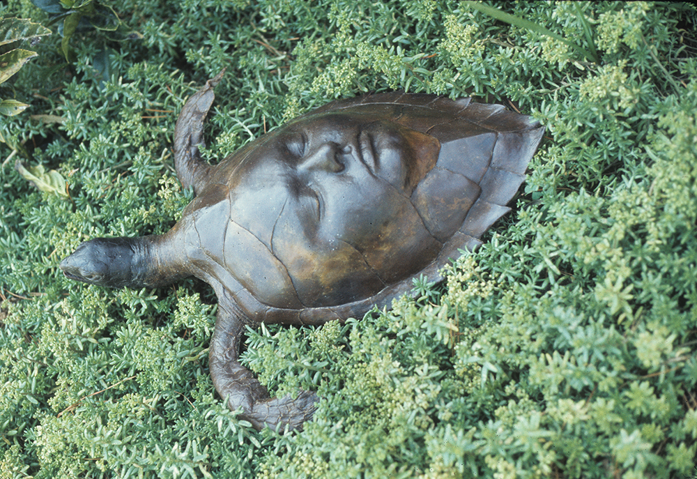 1972 Single Turtle Outdoors 3_72ppi.jpg