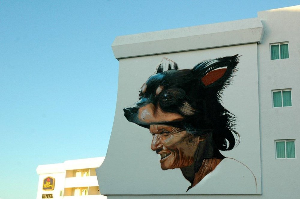 Best Western campeche perrito arte urbano
