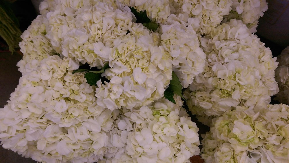 Hydrangeas Imported  Year round