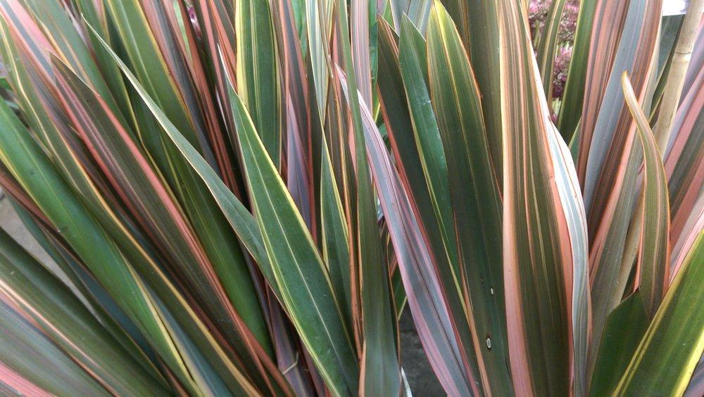 Flax Leaf  Year round