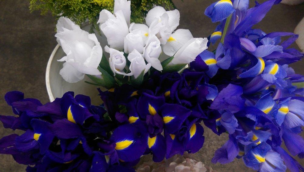 Iris  Year round