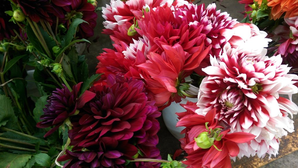 Dahlias  Seasonal