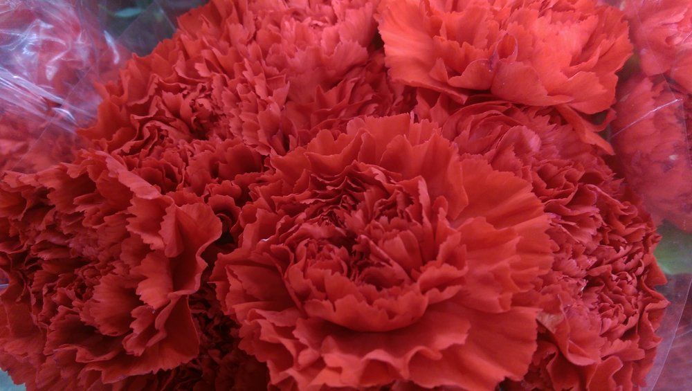 Carnations  Year round