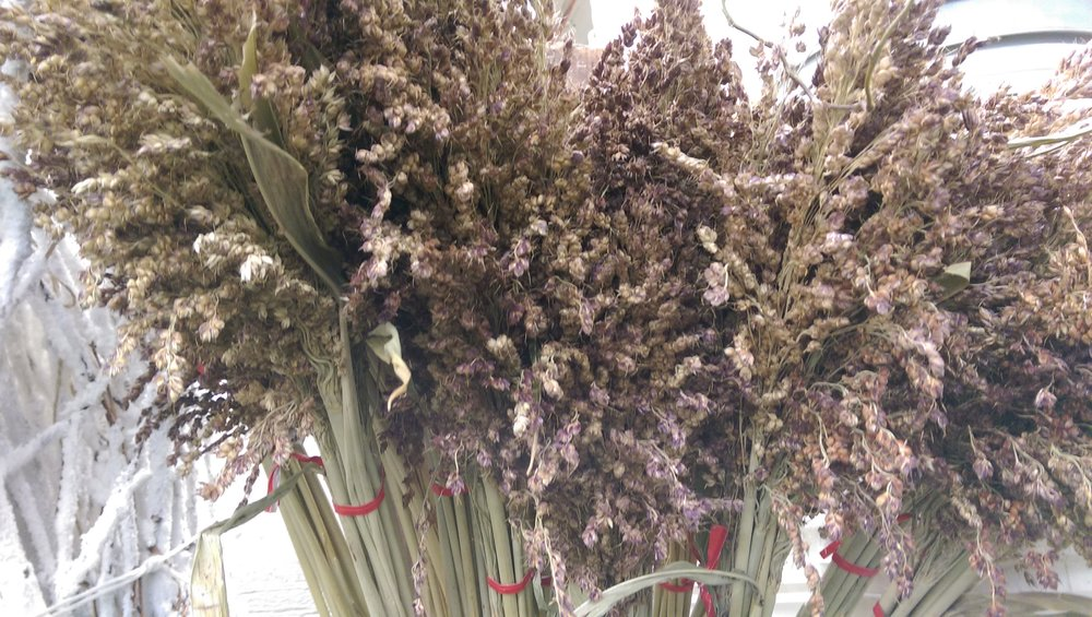 Sorghum  Seasonal