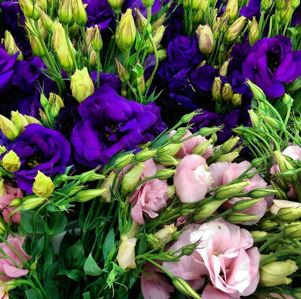 Lisianthus  Seasonal
