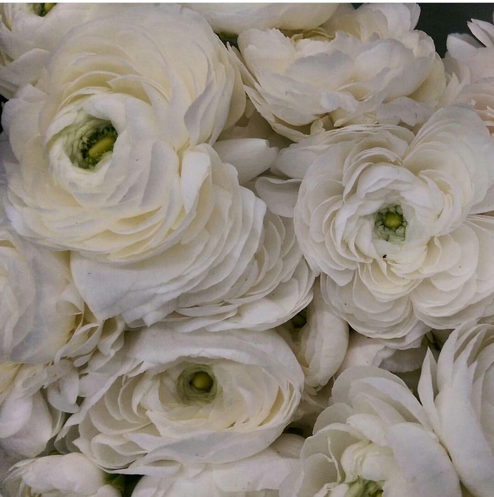 Ranunculus  Seasonal