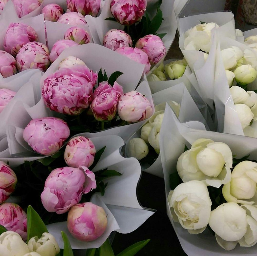 Peonies  Seasonal