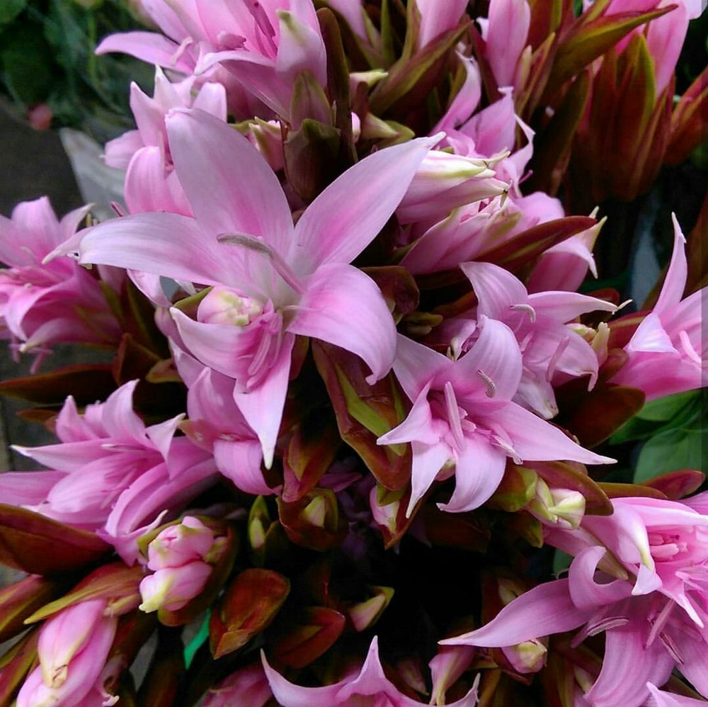 Naked Ladies  Lilies  Seasonal