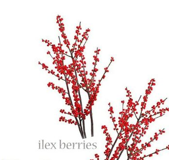Ilex berry  Seasonal