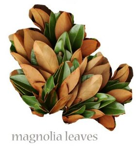 Magnolia  Seasonal