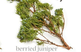 Juniper pine  Seasonal