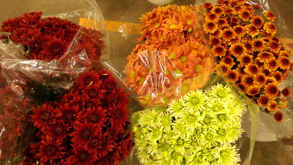 Pompons Fall colors  Year round