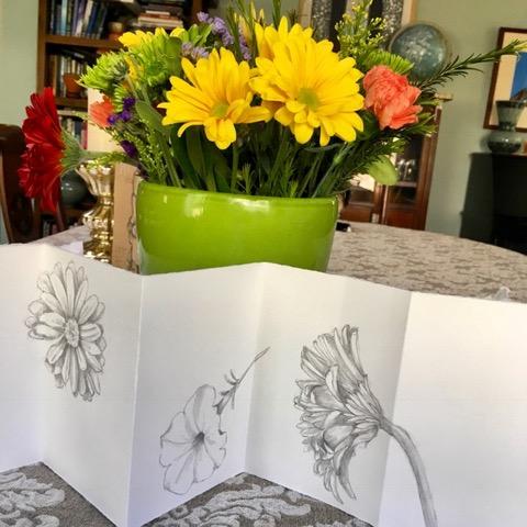 LaFazio flower drawings in pencil.jpeg