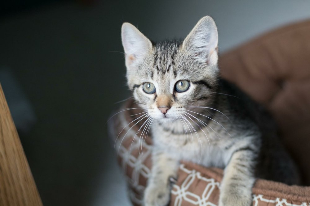 My name is Winnie! I am 10 weeks old and need a family to call my own!    Adopt me !