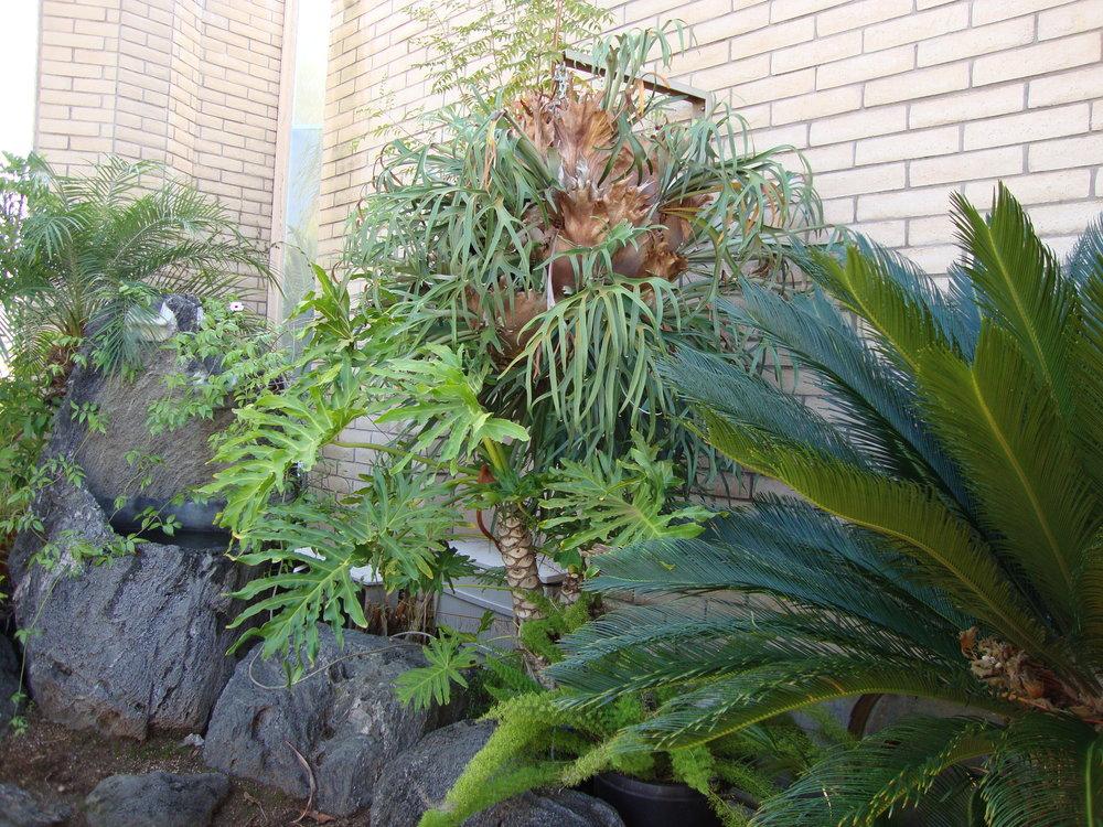 Tropical plants.JPG