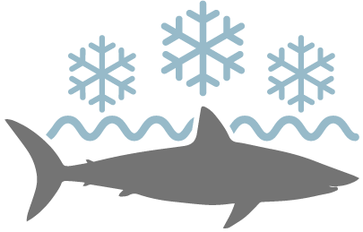 Cold & Sharky