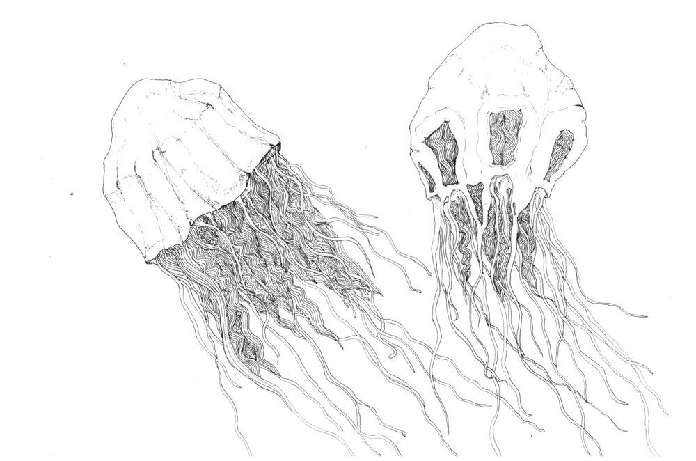 jellyfisha.jpg