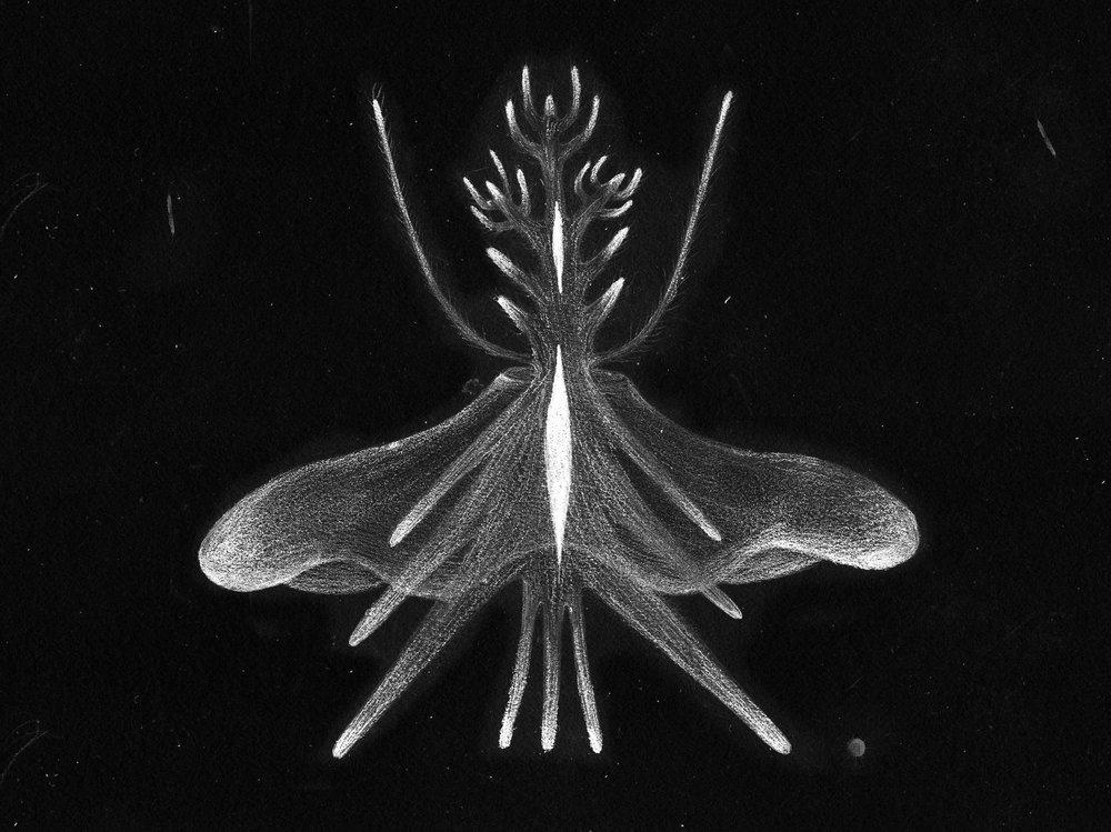生物6.jpg
