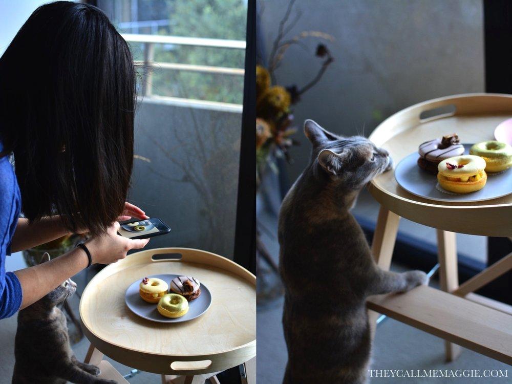 cat-dessert.jpg