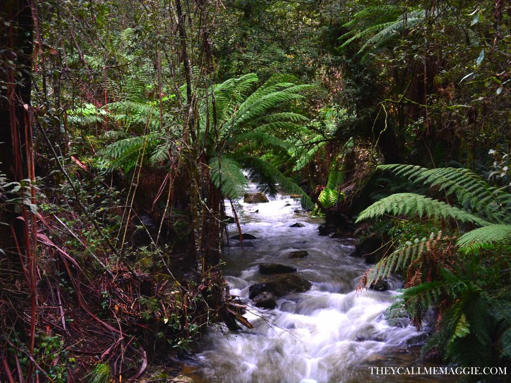 lilydale-falls-tasmania.jpg