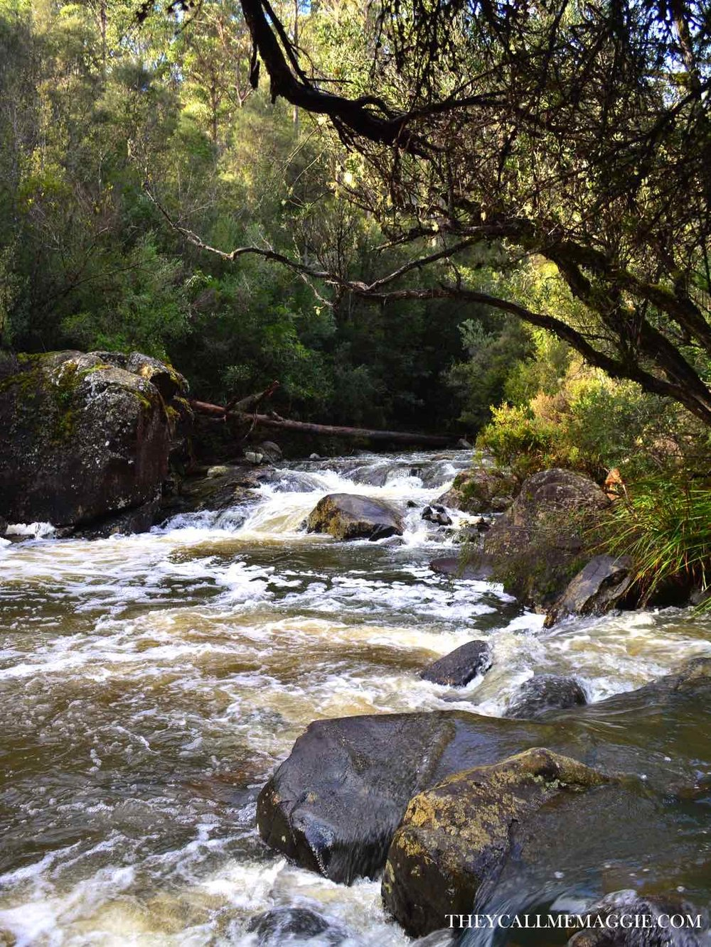 holybank-forest-stream.jpg