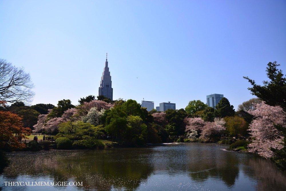 sakura-shinjuku-park.jpg