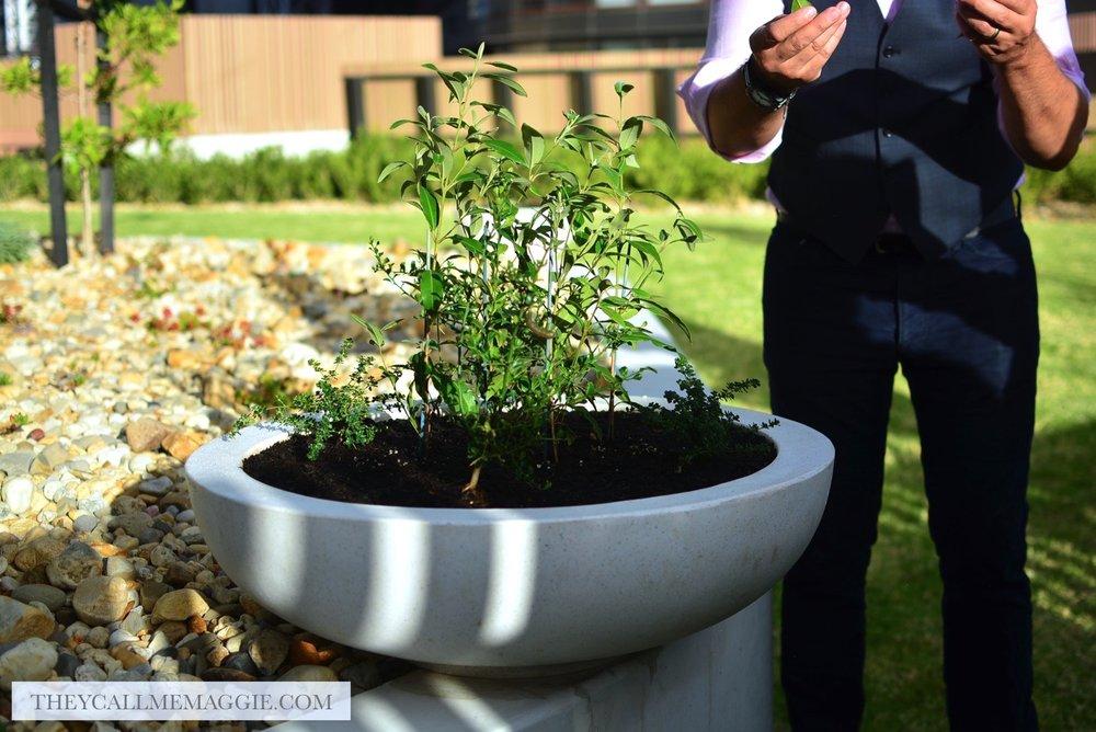Australian-native-plant.jpg