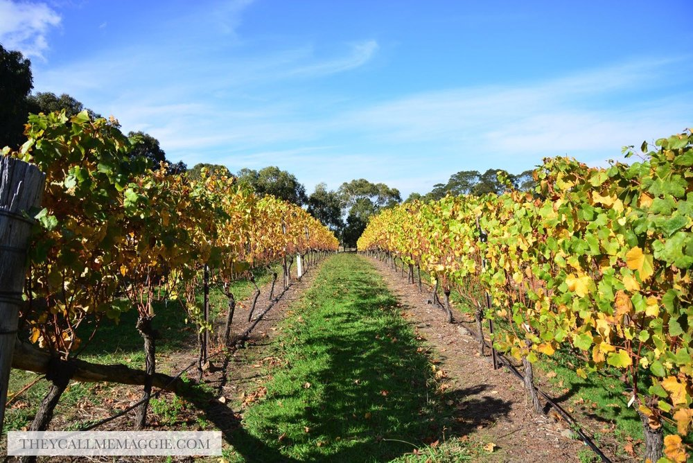 winery-vineyard.jpg