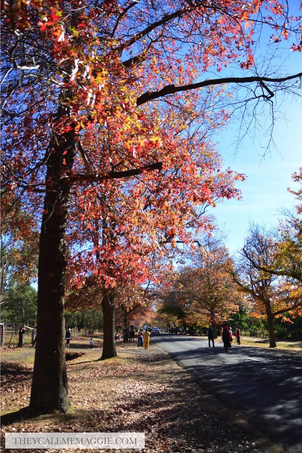 autumn-trees.jpg