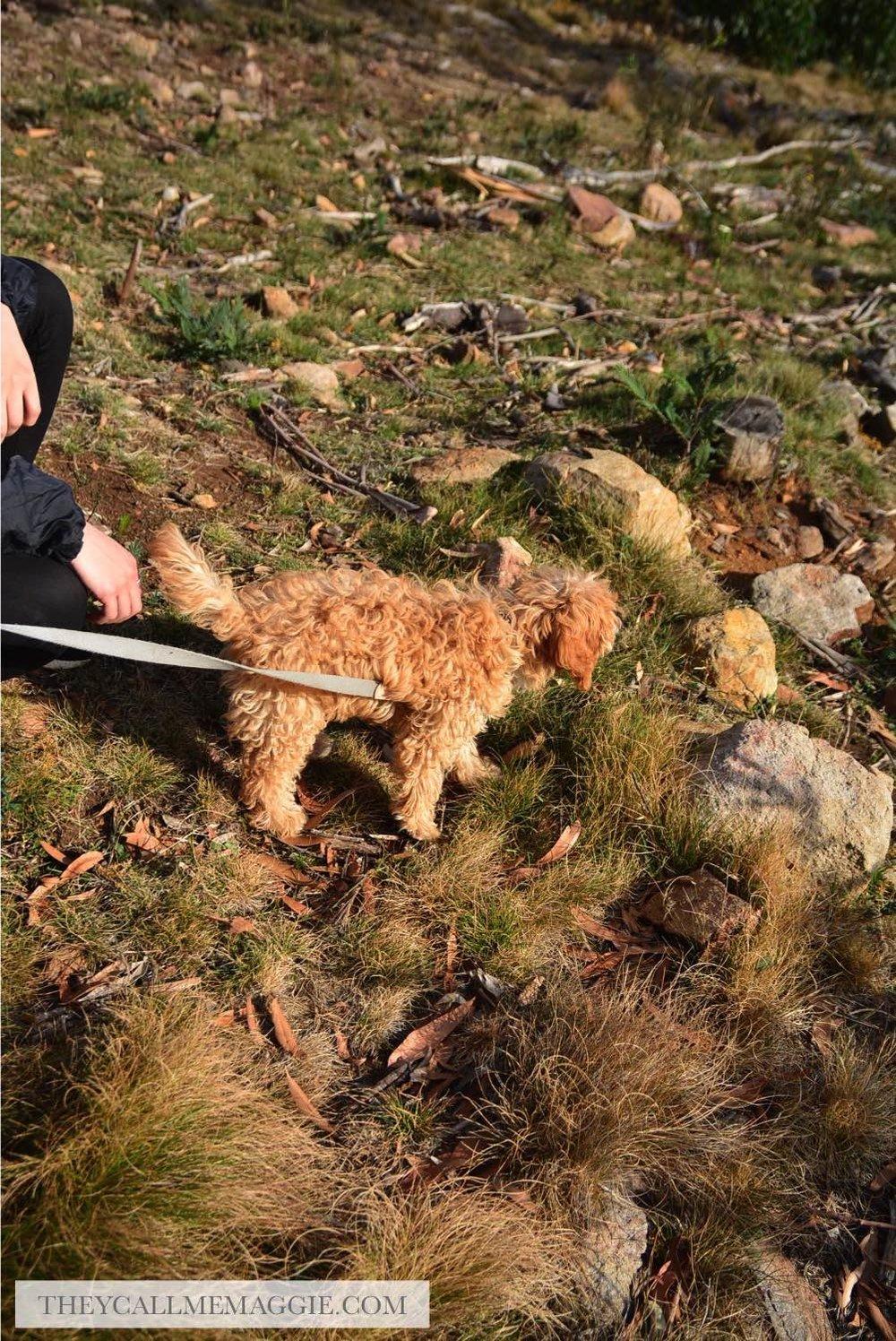 explorer-dog.jpg