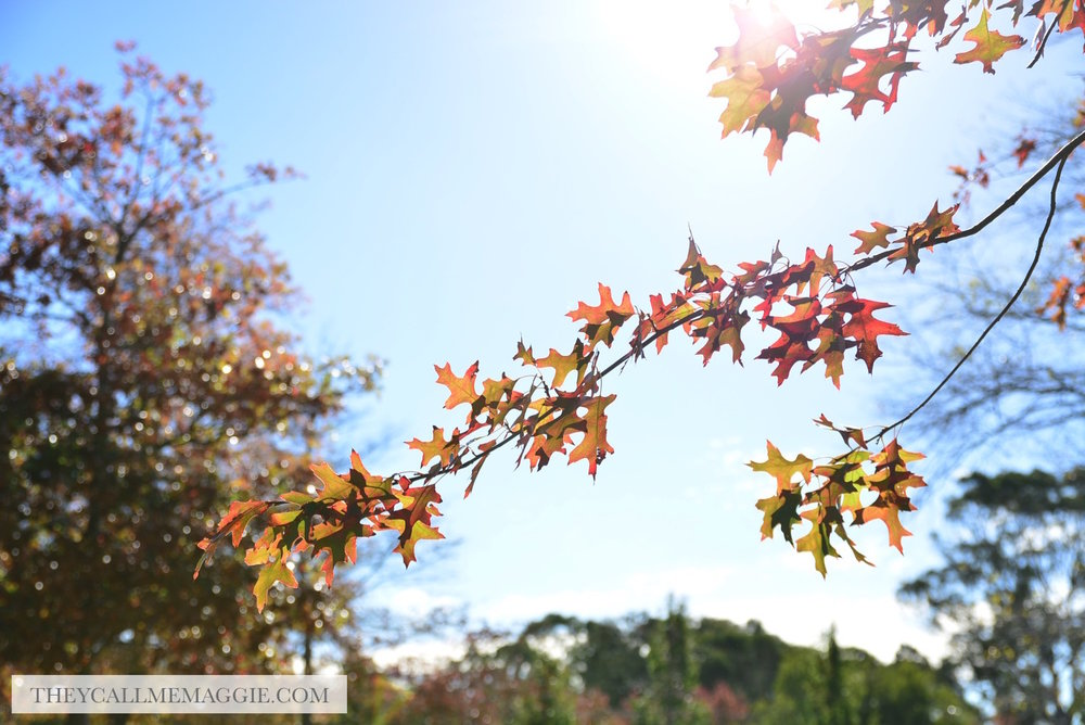 autumn-tree-branch.jpg