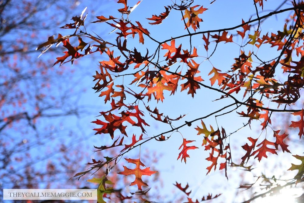 autumn-foliage.jpg