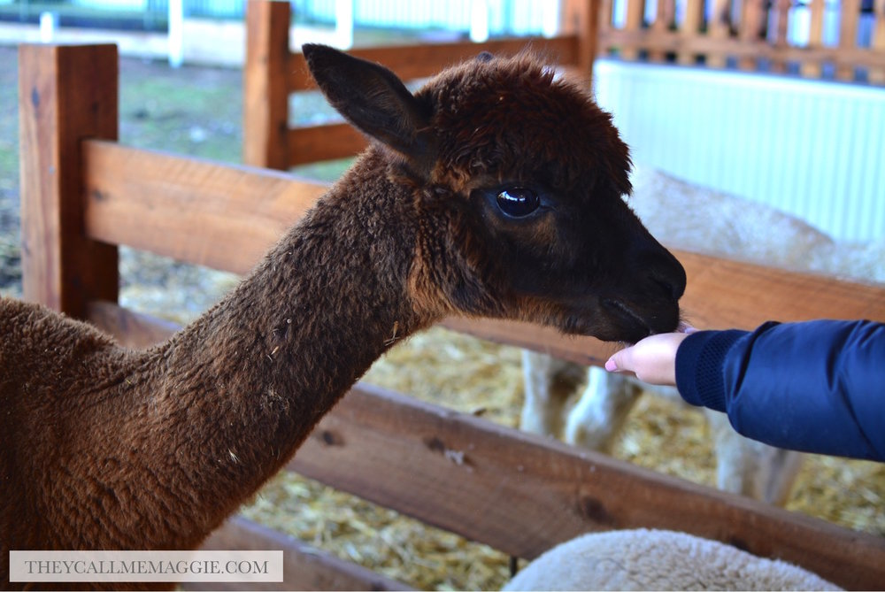 alpaca-creswick.jpg