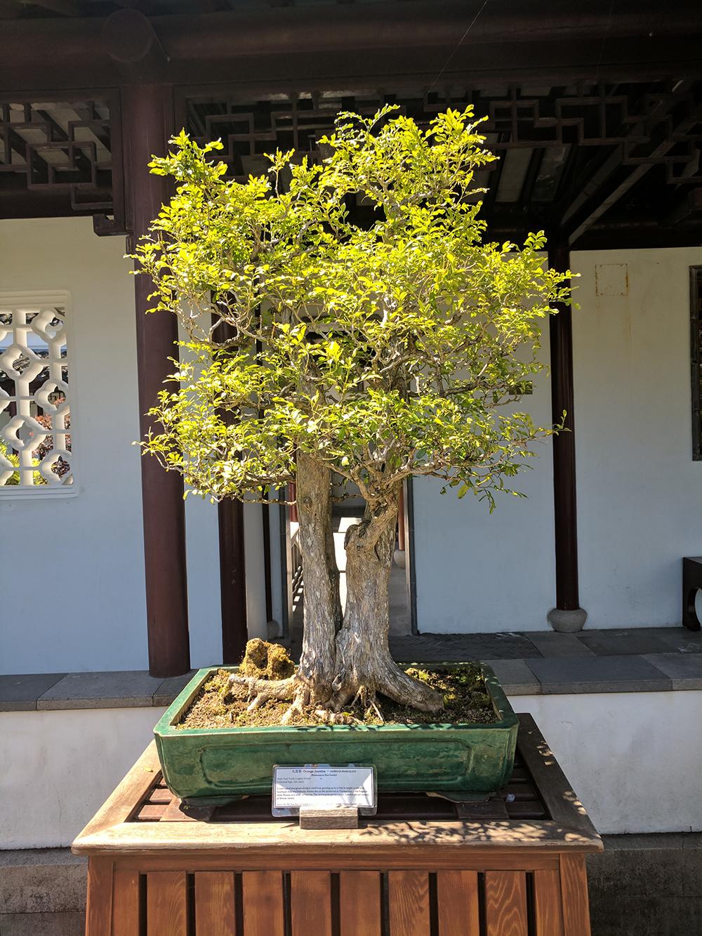 Dr.+Sun+Yat-Sen+Classical+Chinese+Garden.jpg