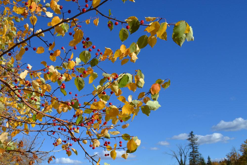 Fall in Montgomery 6.jpg