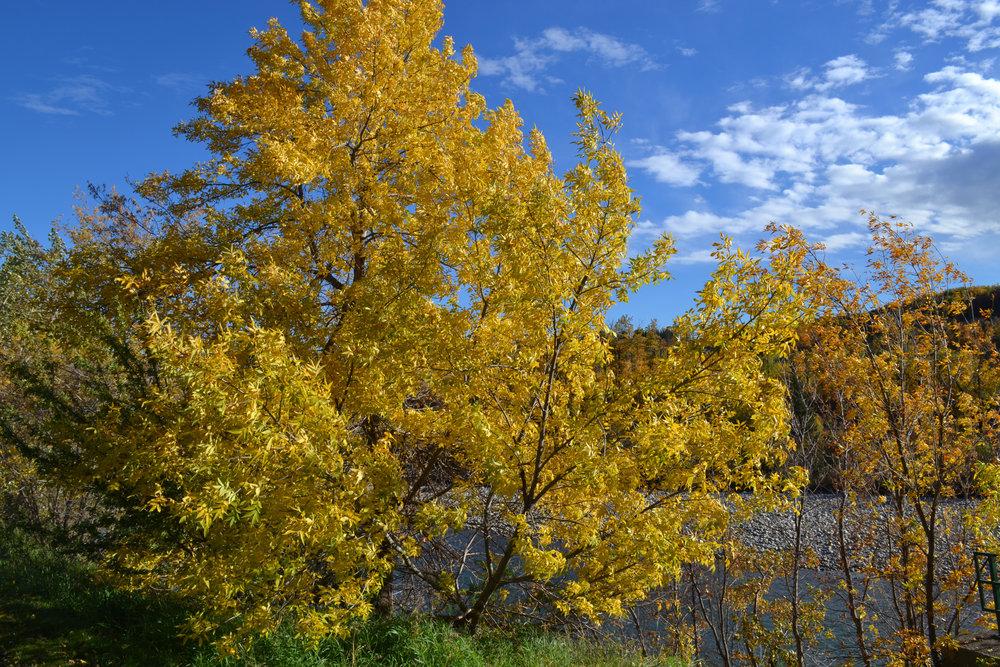 Fall in Montgomery 7.jpg