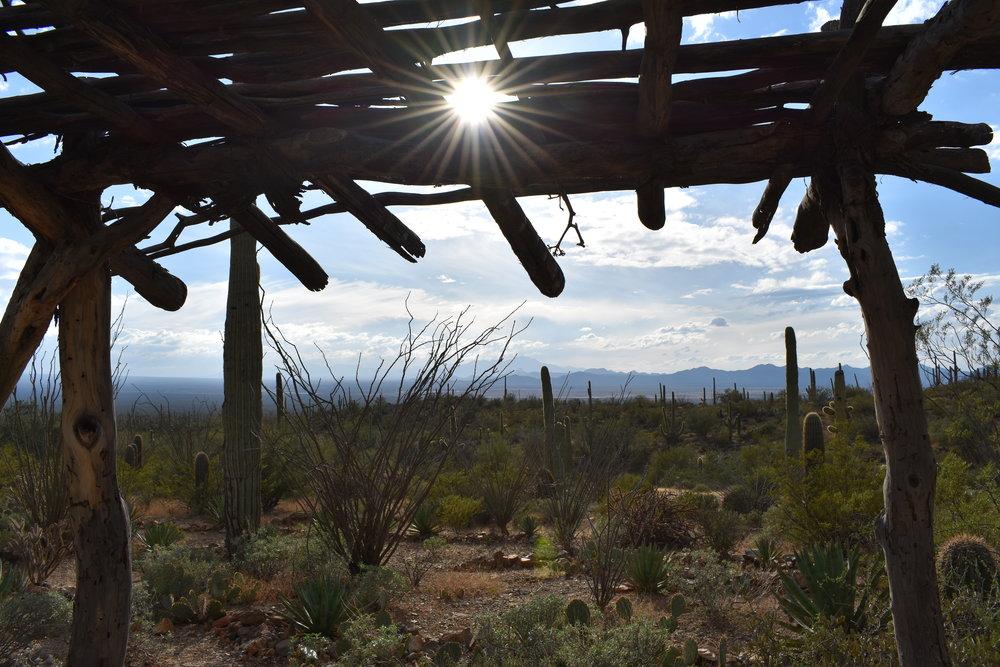 arizona-sonoran-desert-museum-tucson-az