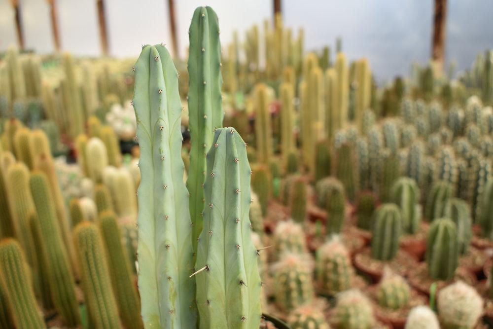 b&b-cactus-tucson-az