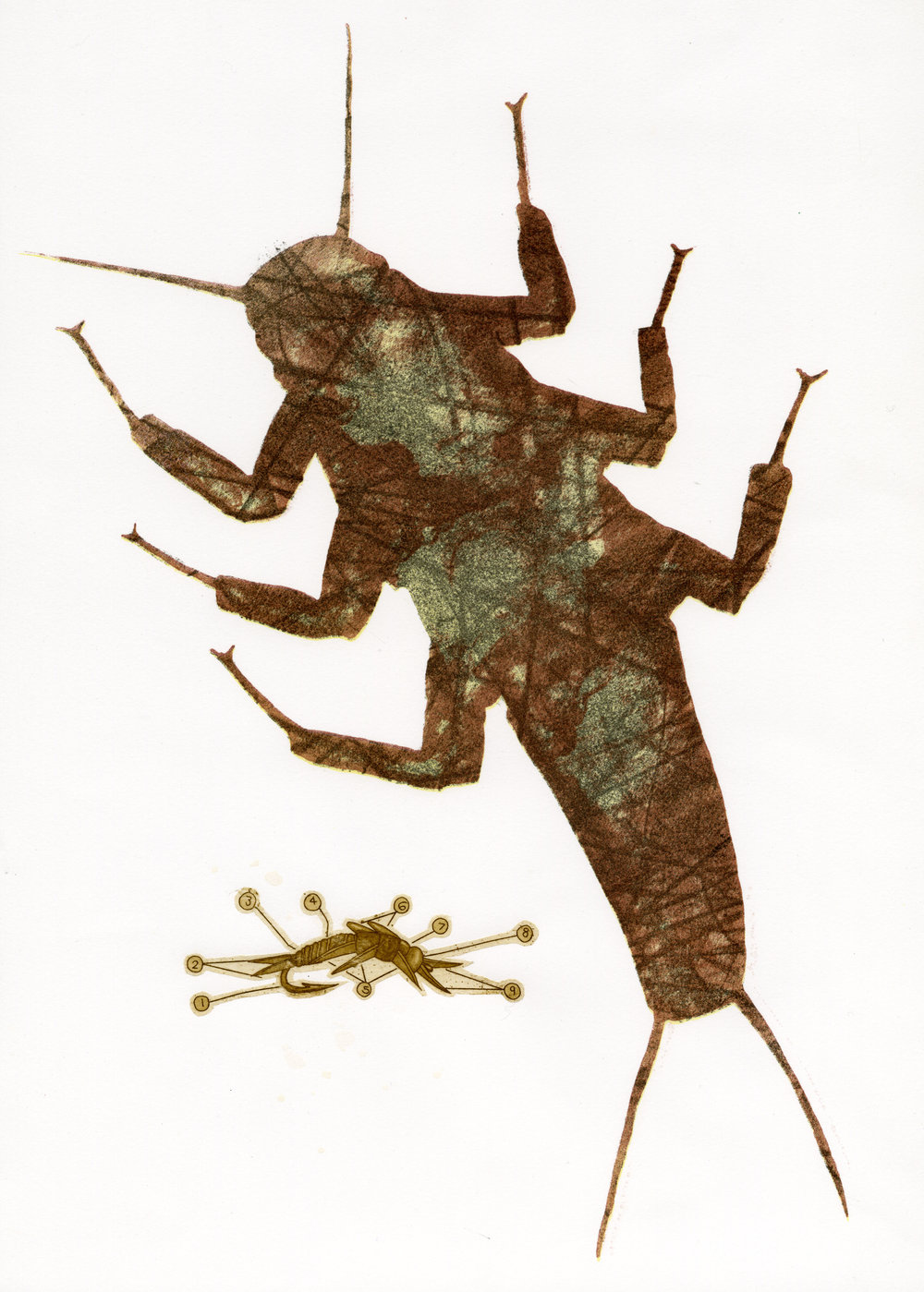 "Stonefly Study   ,   2012 Lithograph w/ Small Intaglio Colle 15 "" x 22"""