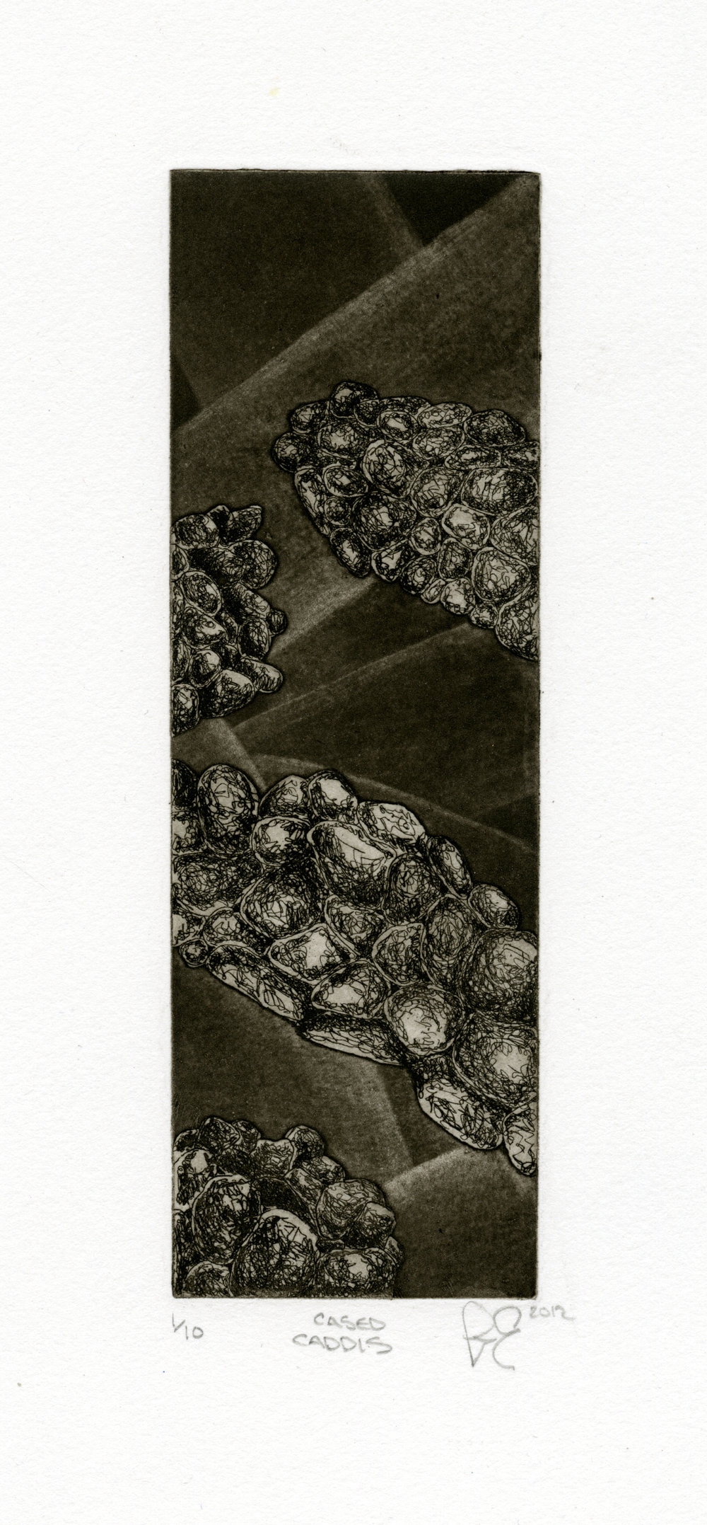 "Cased Caddis   ,2012  Intaglio 2"" x 6"""