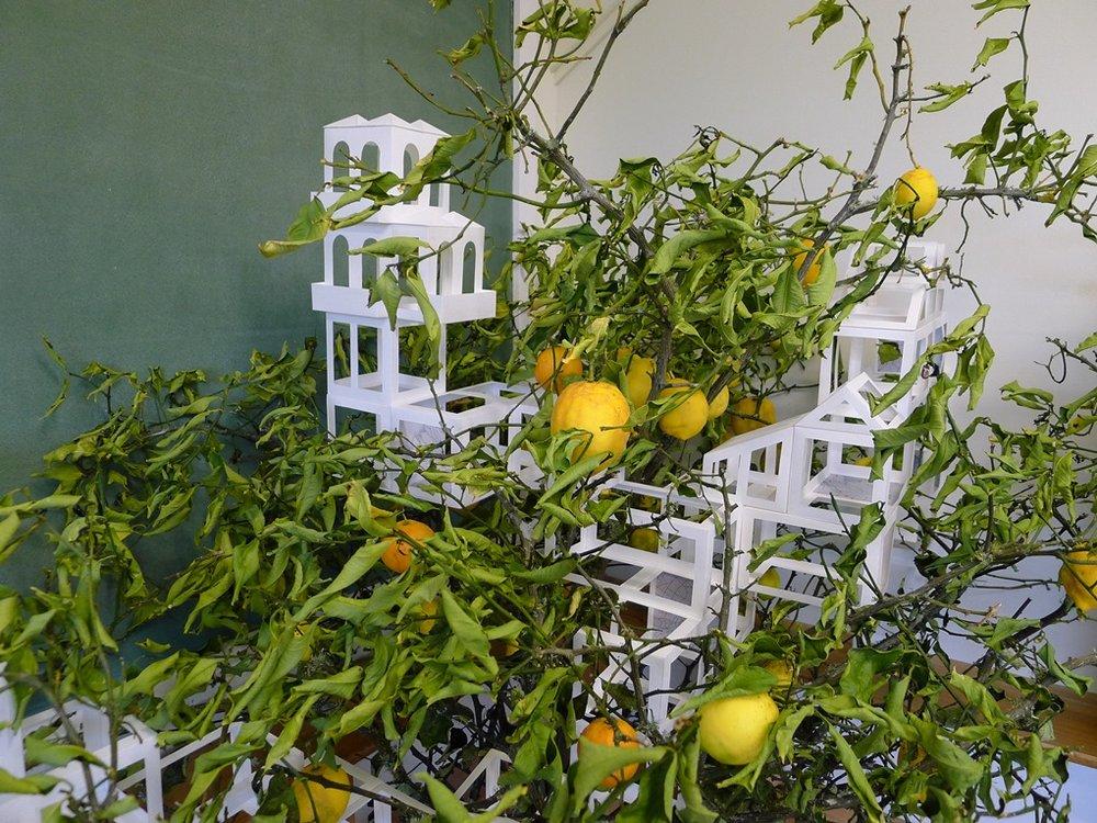 Dodge the lemons