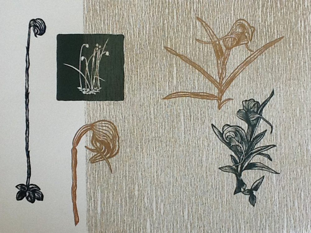 across-the-ditch-giving-banks-the-nod-linocut-greenhood-orchids