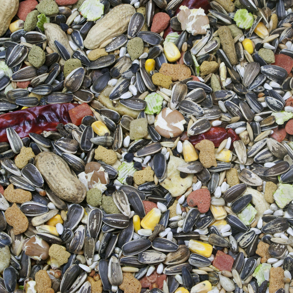 Vita Seed_Parrot_Web.jpg