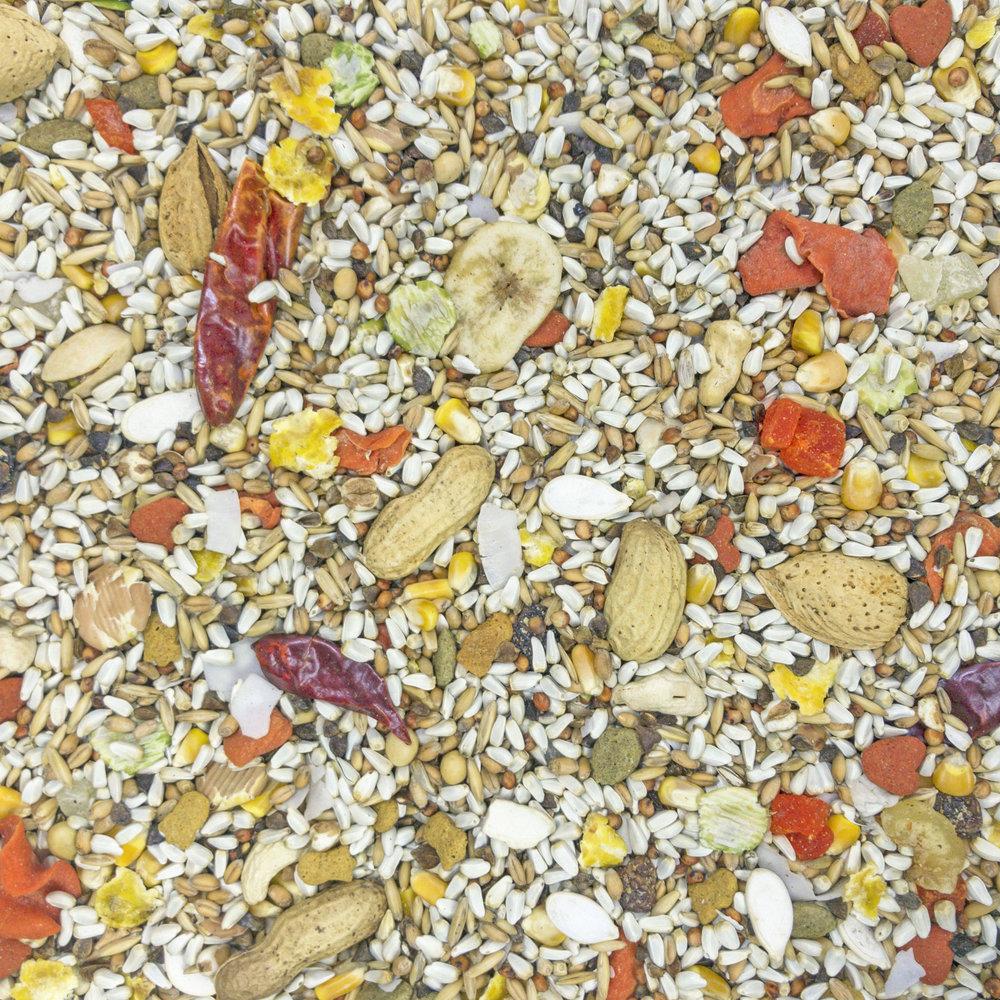 30121_Safflower-Gold_Parrot_Full-Size.jpg